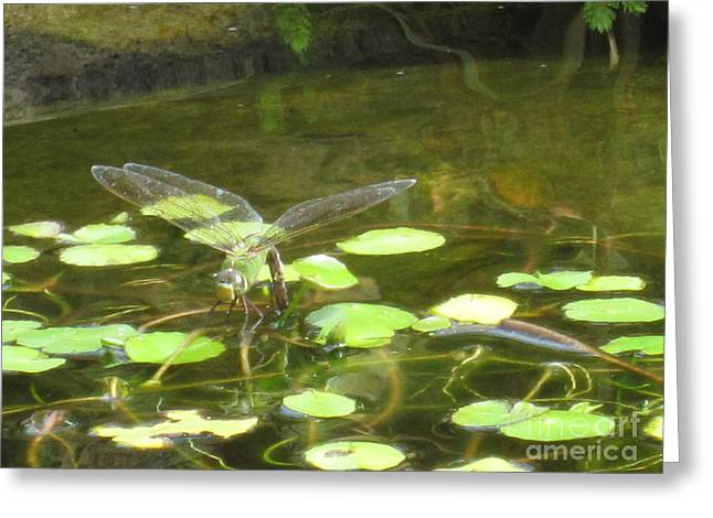 Dragonfly Greeting Card by Laurianna Taylor
