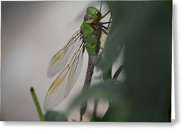 Dragonfly Greeting Card by Michel DesRoches
