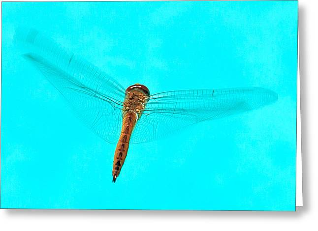 Dragonfly Greeting Card by Miguel Capelo