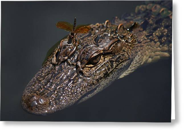 Dragonfly On A Alligators Head Greeting Card by Paulette Thomas