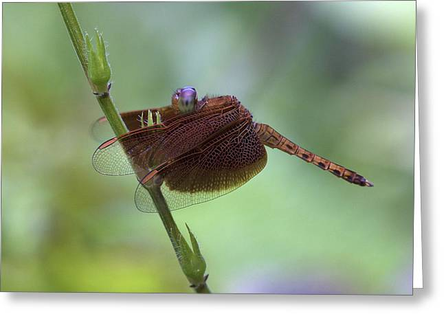 Dragonfly On A Leaf Greeting Card by Zoe Ferrie