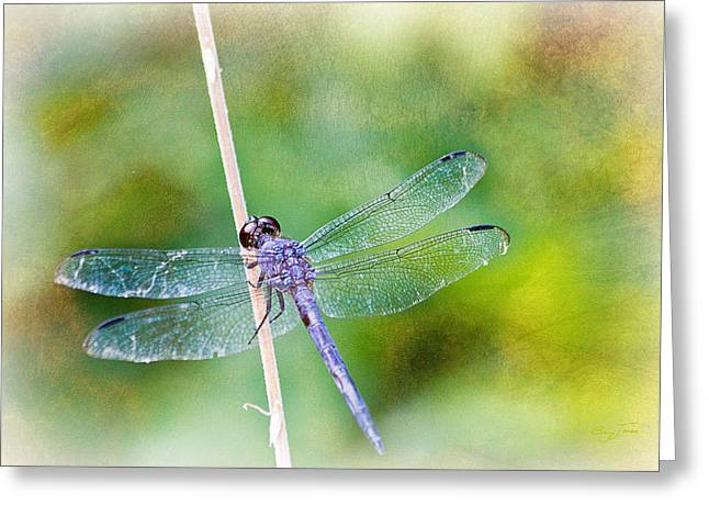 Dragonfly Respite 001 Greeting Card by Barry Jones