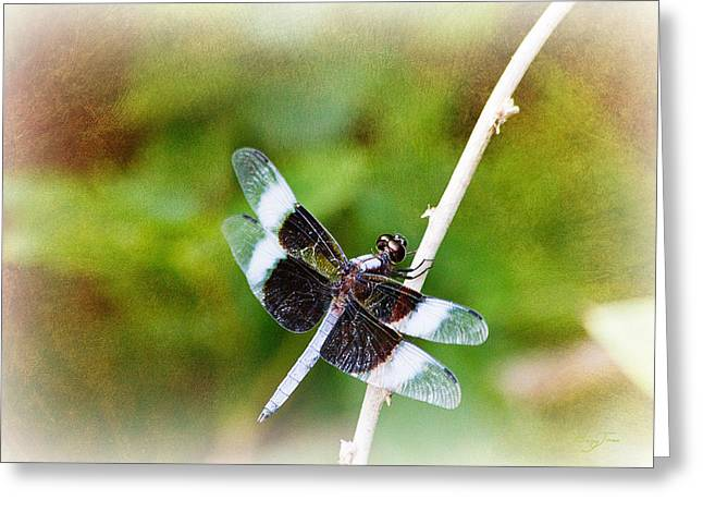 Dragonfly Respite 002 Greeting Card by Barry Jones