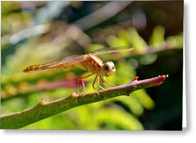 Greeting Card featuring the photograph Dragonfly by Werner Lehmann