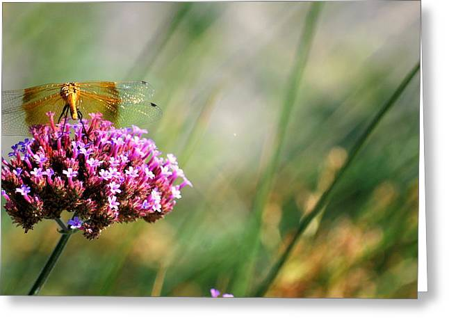 Greeting Card featuring the photograph Dragonfly Wings by Amee Cave
