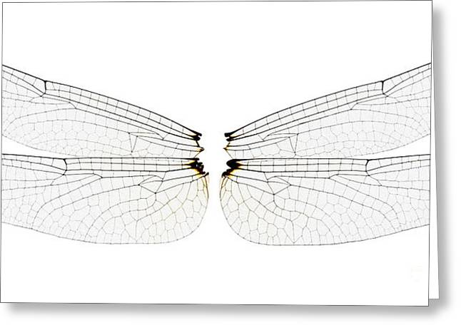 Dragonfly Wings Greeting Card by Raul Gonzalez Perez