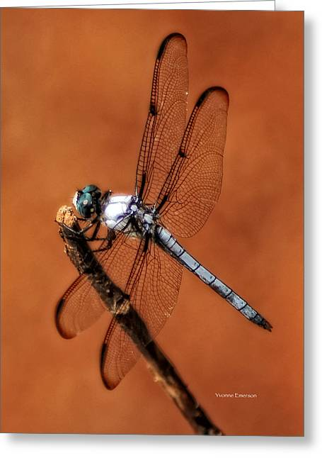 Greeting Card featuring the photograph Dragonfly by Yvonne Emerson AKA RavenSoul