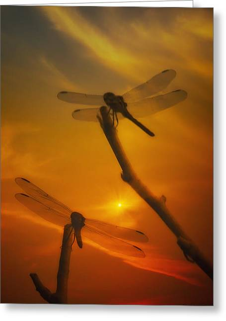 Dragonflys In The Sunset Greeting Card by Tom York Images