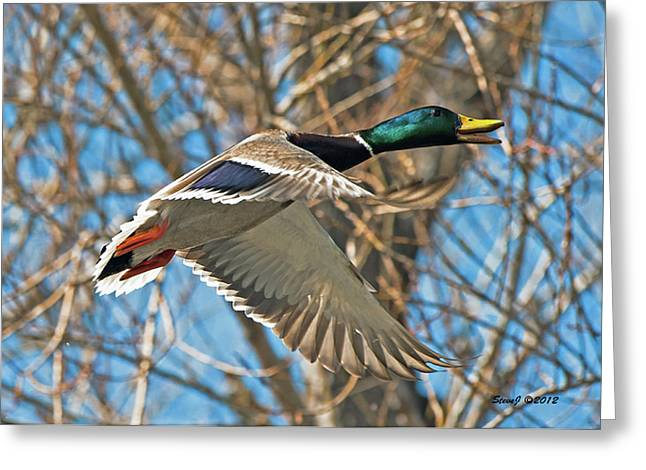 Greeting Card featuring the photograph Drake In Flight by Stephen  Johnson