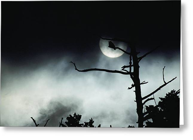 Dramatic Scene Of A Dead Tree Greeting Card by Michael S. Quinton