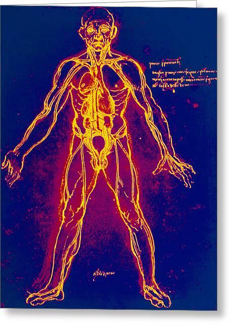 Drawing Of Human Venous System (leonardo Da Vinci) Greeting Card by Mehau Kulyk