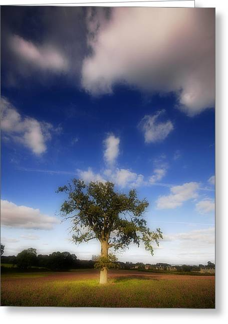Greeting Card featuring the photograph Dream Catcher by John Chivers