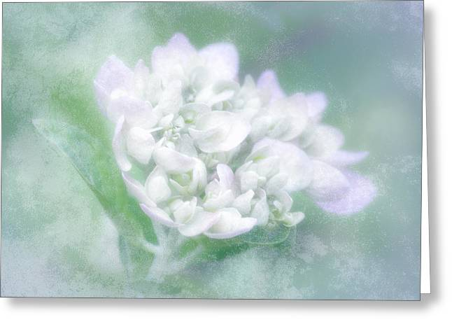 Dreaming Floral Greeting Card by Brenda Bryant