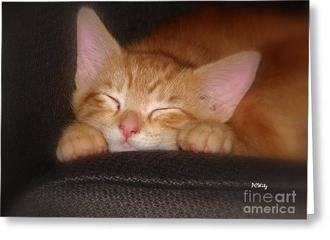 Dreaming Kitten Greeting Card