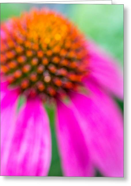 Dreamy Abstract Coneflower  Greeting Card by Susan Stone