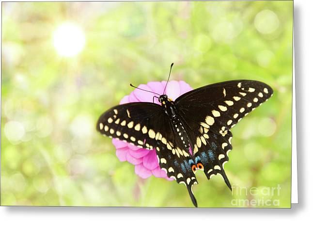 Dreamy Black Swallowtail Butterfly Greeting Card