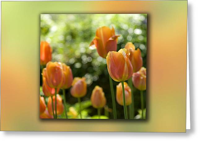 Dreamy Tulip Flowers Greeting Card by Pixie Copley
