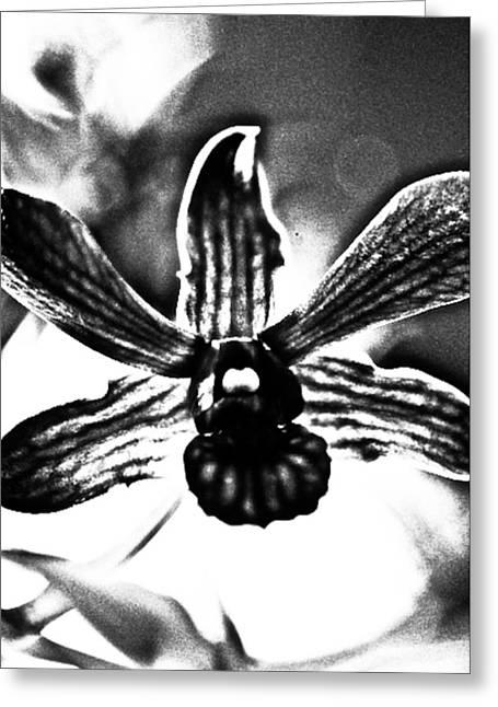 Dressed In Black Greeting Card by Kornrawiee Miu Miu