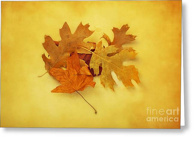 Dried Autumn Leaves Greeting Card