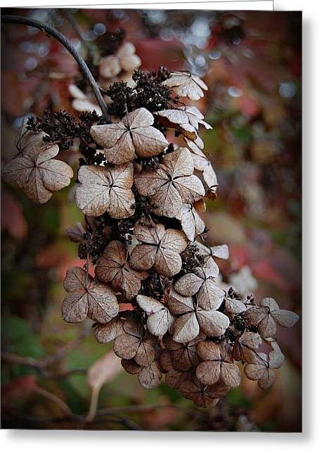 Dried Bloom 2 Greeting Card by Beverly Hammond