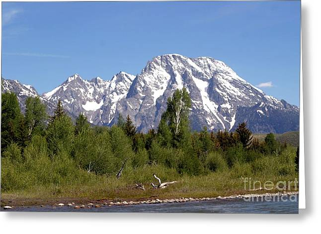 Driftwood And The Grand Tetons Greeting Card by Living Color Photography Lorraine Lynch