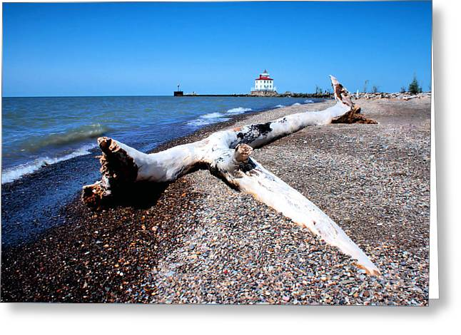 Driftwood At Erie Greeting Card by Michelle Joseph-Long