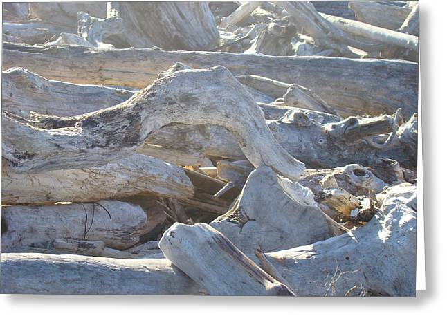 Driftwood Beach Art Prints Coastal Morning Light Nature Greeting Card by Baslee Troutman