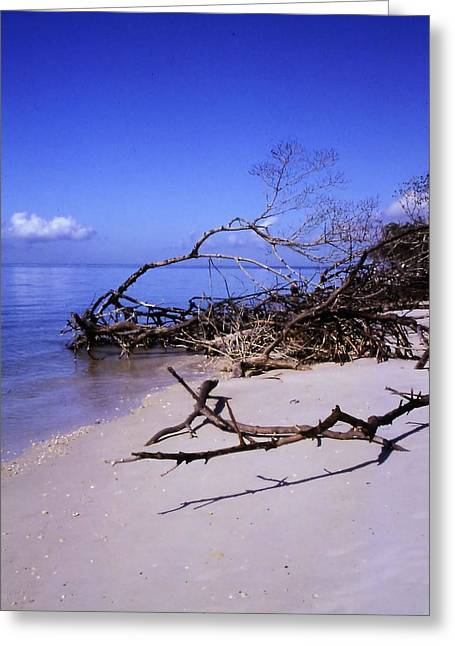 Driftwood Beach Greeting Card by Rosalie Scanlon