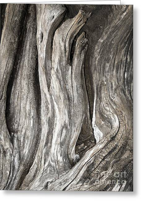 Driftwood Design 53 Greeting Card by Larry Lawhead