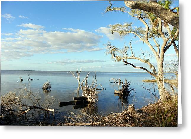 Driftwood Landscape 1 Greeting Card by Sheri McLeroy