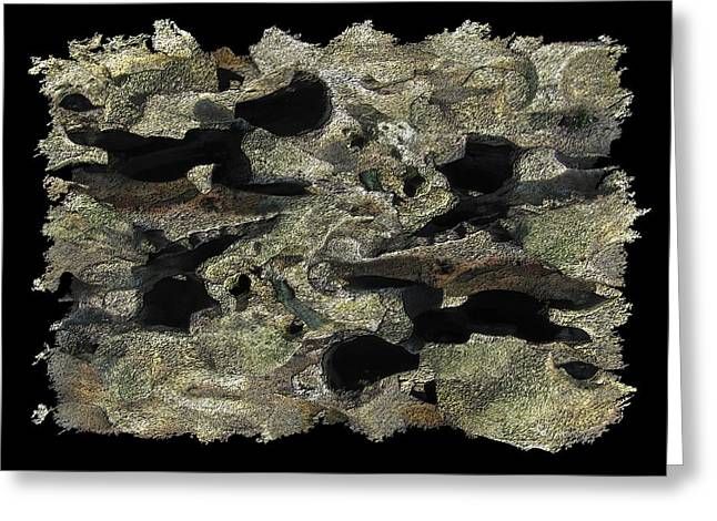 Driftwood Study Greeting Card by Tim Allen