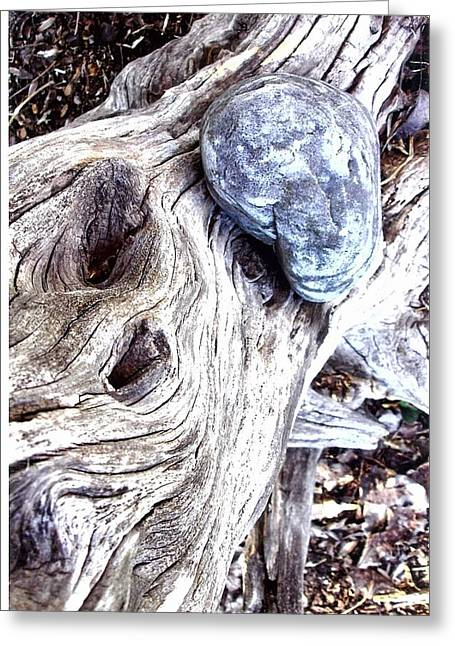 Driftwood Greeting Card by Suzanne Fenster