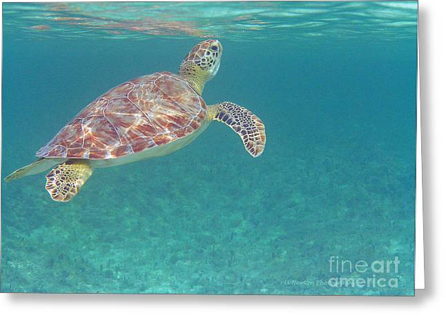 Undersea Photography Greeting Cards - Drinking the Air Greeting Card by Li Newton