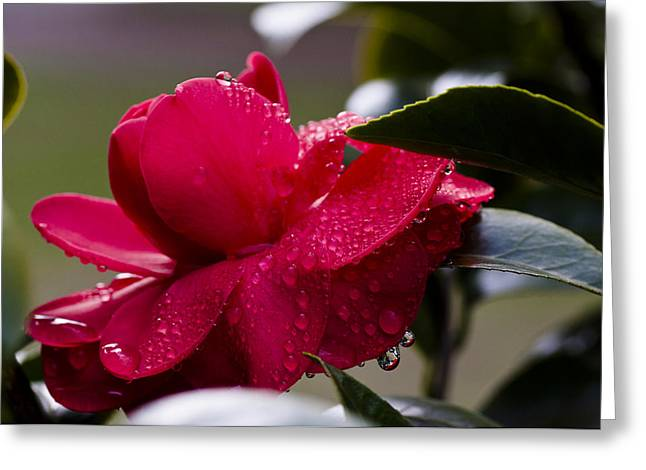 Dripping Color Greeting Card by Jim Neumann
