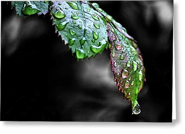 Dripping Wet Greeting Card by Karen Scovill