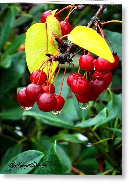 Drips And Berries Greeting Card by Ruth Bodycott