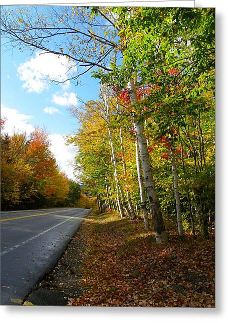 Driving Though The Birches Greeting Card