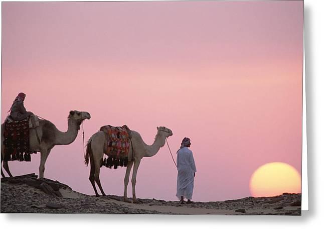 Dromedary Camelus Dromedarius Pair Greeting Card by Gerry Ellis