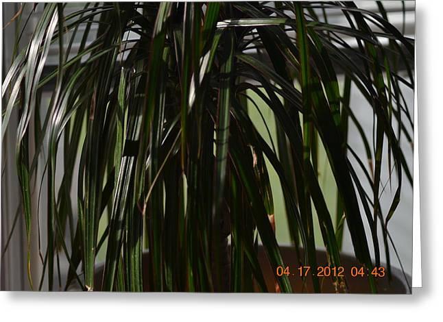 Drooping Tree Leaves Greeting Card by Heidi Frye