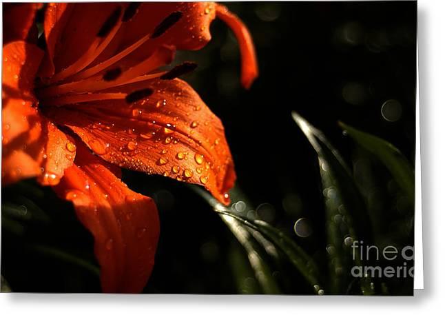 Droplets On Flower Greeting Card by Vilas Malankar