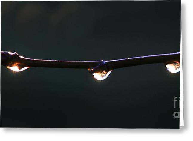 Drops Of Sunrise Greeting Card by Erica Hanel