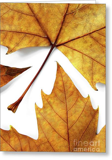Dry Leafs Greeting Card by Carlos Caetano