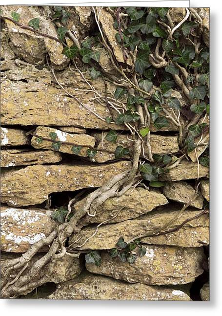 Dry Stone Wall Greeting Card by Adrian Bicker