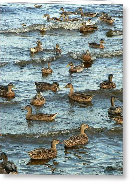 Duck Convention Greeting Card by Seiko Ti