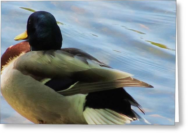 Duck Greeting Card by Todd Sherlock
