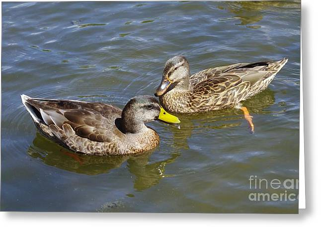 Ducks In The Sun Greeting Card by Jeff Swan