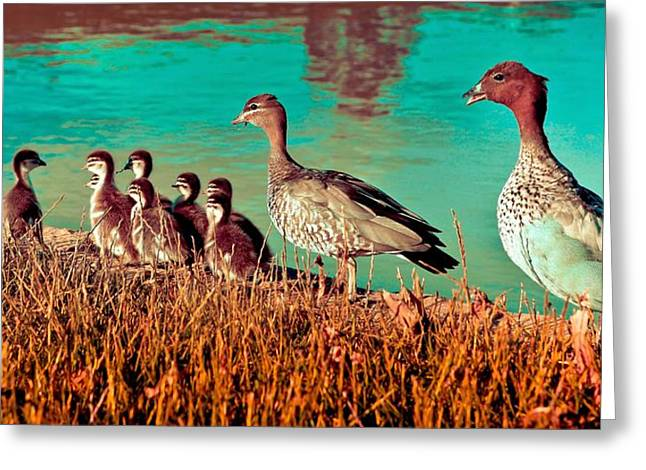 Ducky Family Greeting Card by Bernard Yong