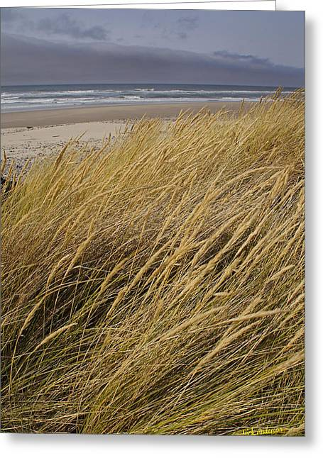 Dune Grass On The Oregon Coast Greeting Card by Mick Anderson