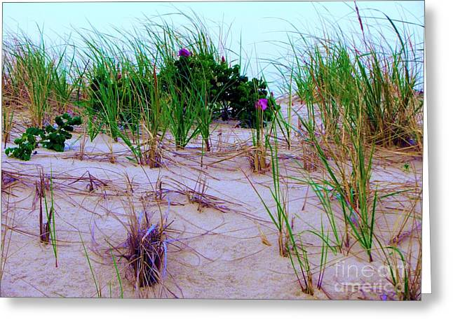 Dunes Greeting Card by Susan Carella