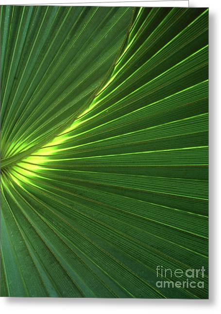 Dwarf Palmetto Leaves Greeting Card by Vaughan Fleming